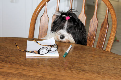 A forlorn, shaggy dog is seated at a table. Eyeglasses, a pad of paper and a pen are on the table in front of it.