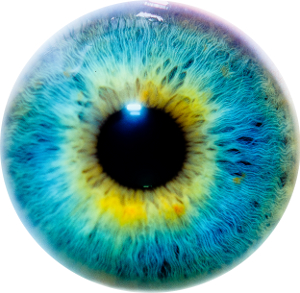 Close-up on the iris and pupil of human eyeball.